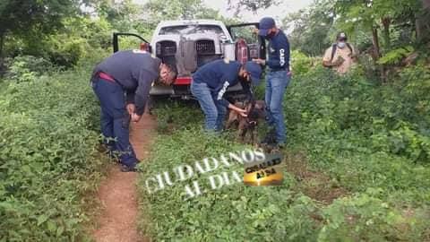 Policía de investigación busca el cuerpo de Erika en Huhí con el apoyo de binomios caninos K9