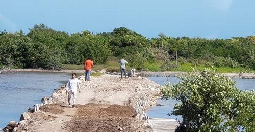 Extranjeros y políticos causan daños a manglares denuncian Dzilameños