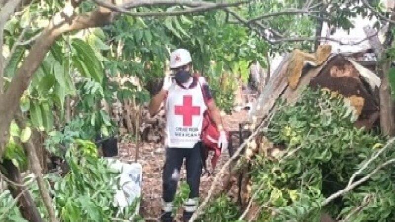 Septuagenario cae de un árbol de anona y muere en Tizimín