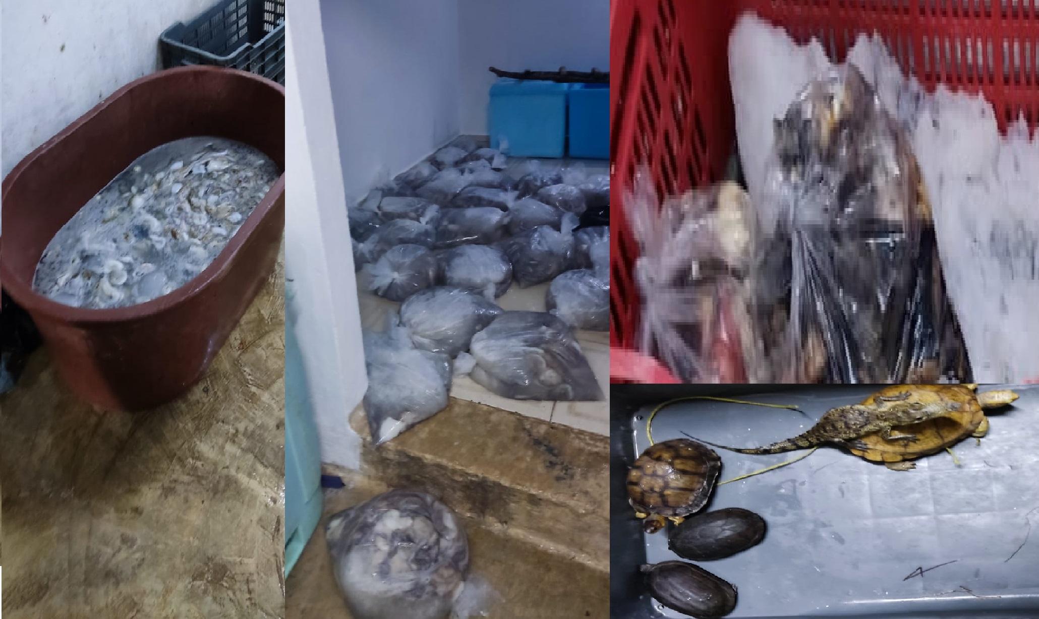 La FGR decomisa más de 7.5 toneladas de producto en veda en Dzilam de Bravo