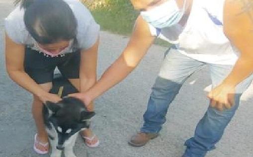 Le vendieron un cachorro Husky en $1,500, era robado, en Tizimín